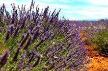 沿薰衣草之路深入瓦朗索勒平原