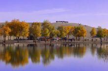 新疆最美的沙漠绿洲/水边胡杨林