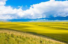夏日的青海门源   万亩油菜花盛开,这是祁连山下的狂野与浪漫