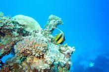 埃及红海 在埃及红海潜水时拍摄的各类鱼