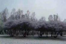 三月三春雪下的老爷山