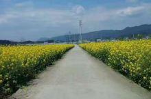 美丽的小路