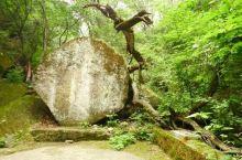 龙泉森林公园景观