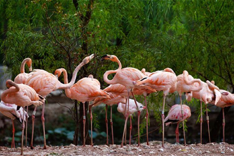 Zhengzhou Zoo1