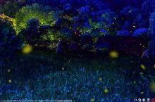 想要有萤火虫的夏天,快来看看这些地方!