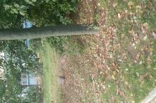 大量的落叶🍂