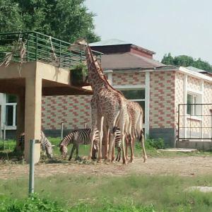 北方森林动物园旅游景点攻略图