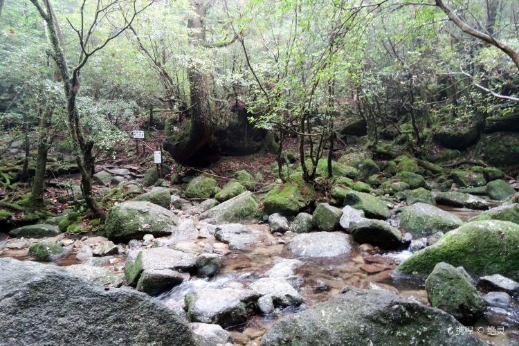 白谷雲水峽4