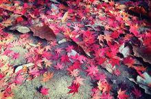 南怡岛的秋季恋歌