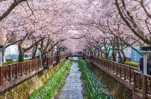 春天来韩国,精彩庆典等你来耍~