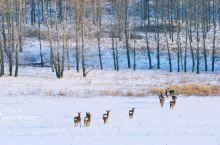 中国最冷的村庄居然不在东北!零下58度不结冰,风景还美如仙境!