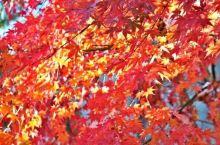 去拍红叶啊!盘点全国10处最美红叶拍摄地!附红叶时间地图
