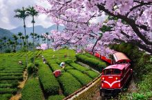 台湾三月赏花指南|沉醉在偶像剧般的花海中