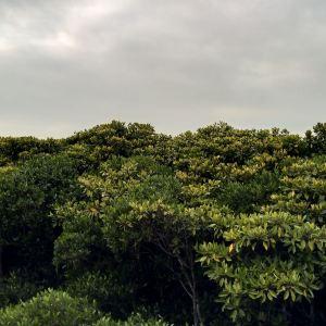 山口红树林旅游景点攻略图