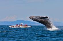 """全球观鲸指南 l 去哪里邂逅""""海洋巨人""""?看这篇就对了!"""