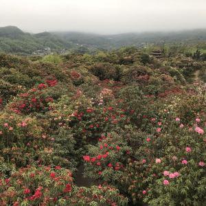 百里杜鹃风景区旅游景点攻略图