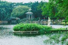 """""""一湾溪水绿,两岸荔枝红""""的广州荔湾湖公园"""