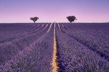 法国—南法普罗旺斯薰衣草和蔚蓝海岸的玩法集锦