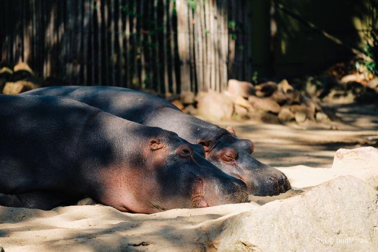 科隆動物園2