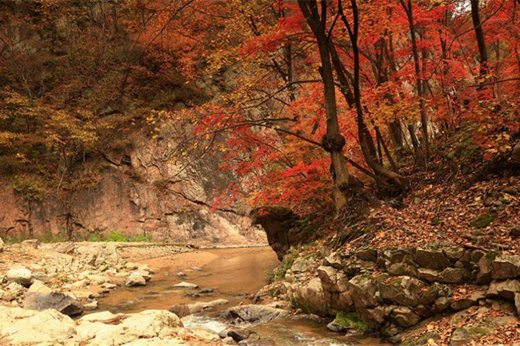Yulongxi Primeval Forest Park2