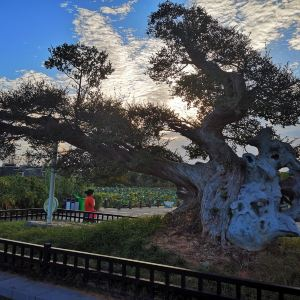 象湖公园旅游景点攻略图