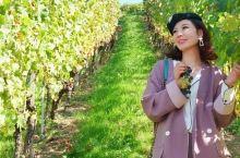 探访德国四大葡萄产区,尝遍今秋佳酿 | 旅深度