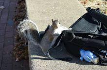 美国行——别人家的大学有松鼠!