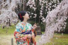 穿着和服去看醍醐寺最美垂樱