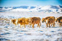 零下20℃的坝上,寂静如画的北国