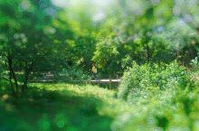 北方赏樱绝佳胜地——青岛中山公园
