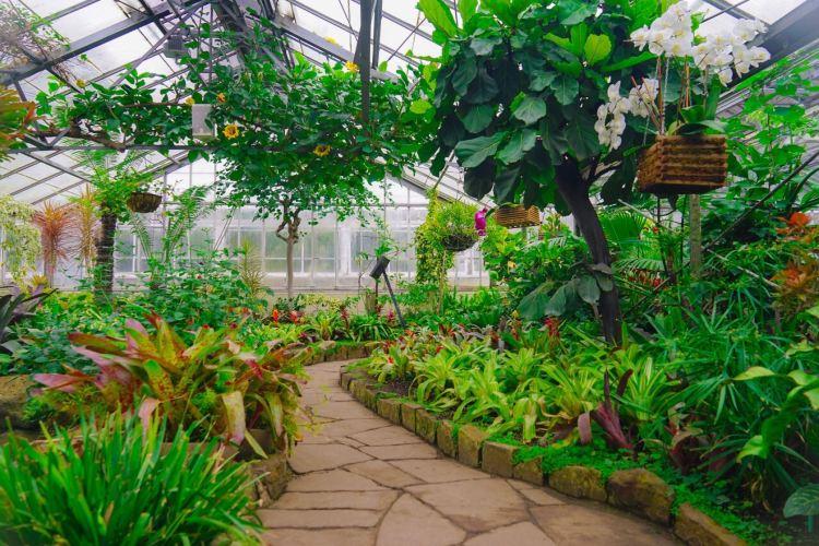 Allan Gardens Conservatory4