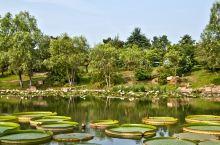 合肥植物园游览