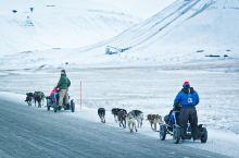 在北极坐一回狗拉雪橇,才知道什么叫贴地飞行