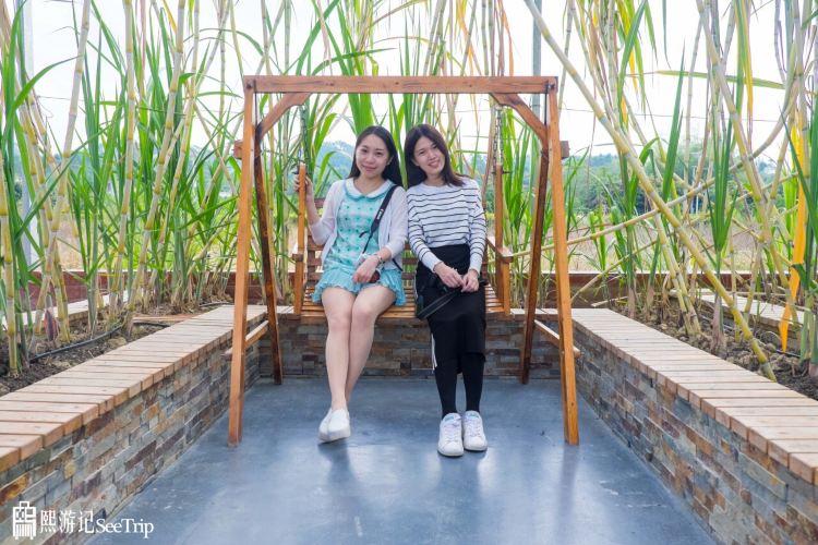 五彩田園農業嘉年華3