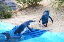 #向往的生活#澳洲最珍稀动物,游客们都没见过