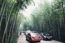 #元旦去哪玩#四川最美的森林公园