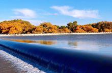 额济纳河美丽风景