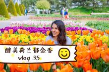 向往的生活:世界上最大的郁金香公园赏花,荷兰郁金香节成片花海