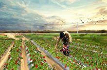 草莓红了!深圳各区摘草莓地图,地址、价格、路线…周末约起!