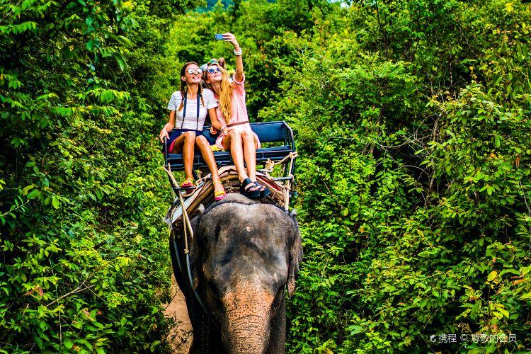 Maesa Elephant Camp3