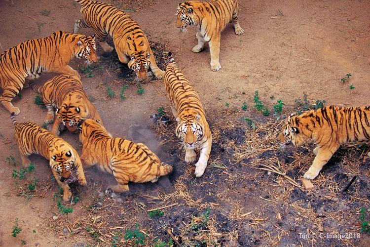 Shenzhen Safari Park3