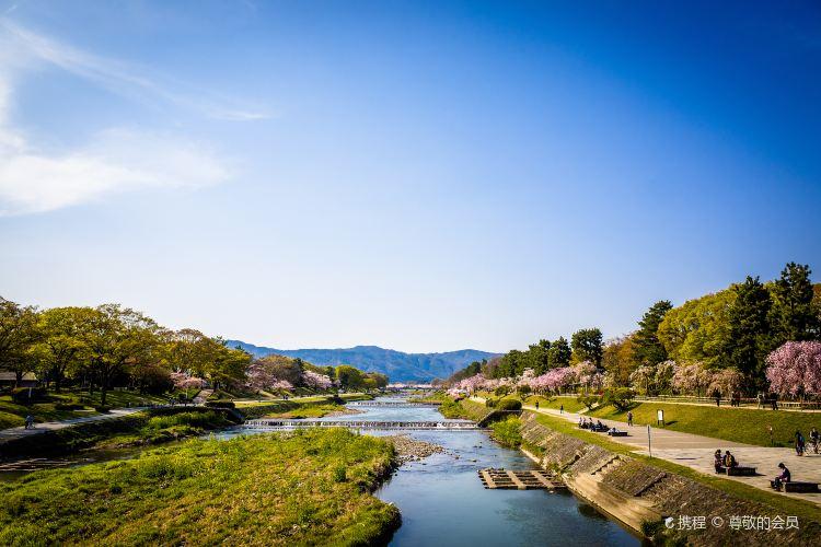 Kamo River3