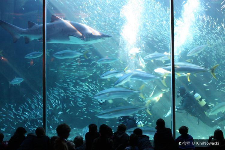 Two Oceans Aquarium3