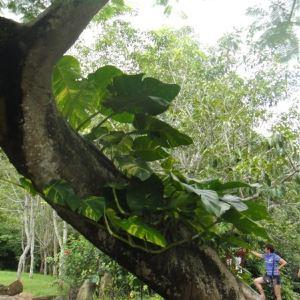 湖南省森林植物园旅游景点攻略图