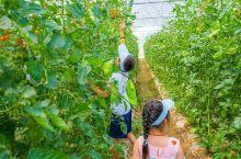 这个夏天,带娃去乌村体验陶渊明笔下的桃花源,来乌村参加夏令营