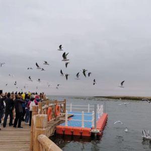 新居延海公园旅游景点攻略图