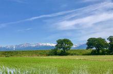 来自大自然的美丽馈赠 —富山県中央植物園  *景点介绍*:这个时候去刚好是植物园的金秋。在植物园的附
