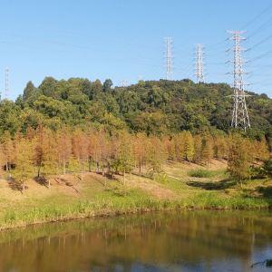 大观湿地公园旅游景点攻略图
