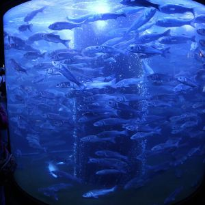 摩纳哥海洋馆旅游景点攻略图