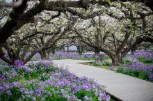 春游江淮请您来 阳春四月,和你共赏宿州好春光